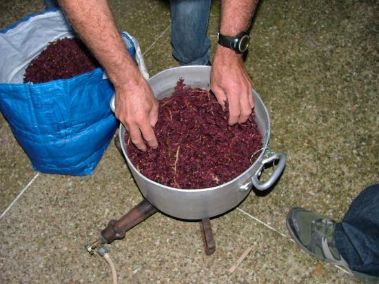 """Couvert avec du """"gène"""", reste du raisin après le pressoir"""